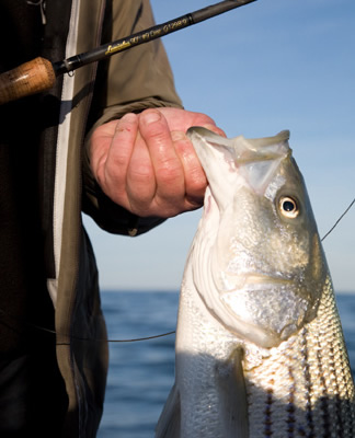 Ct fishing charters for Fishing charters ct niantic
